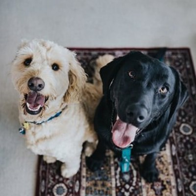 Why picking up after your dog is important