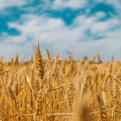 Imported inputs continue to hamper local grain production