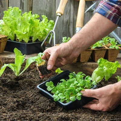 Home gardening boosts happiness and food security