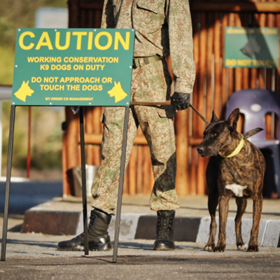 Get to know the K9s that help keep SA's wild animals safe