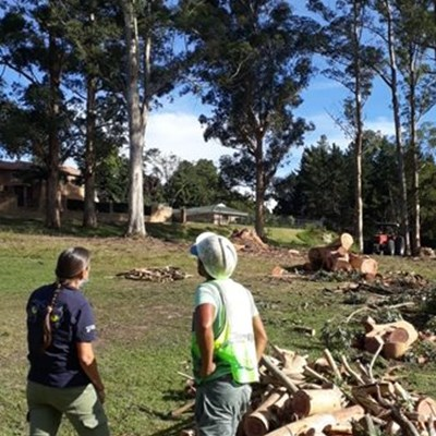 Anger as giant gum trees are felled