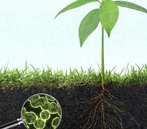 Growing a variety of soil microbes