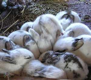 Tips for starting a rabbit farm