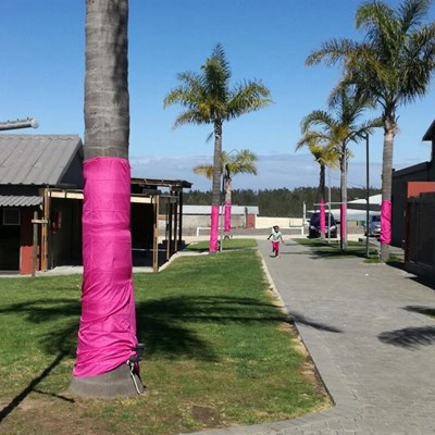Support Pink Trees for Pauline