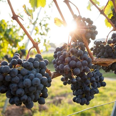 Saai obtains urgent legal opinion on continued wine production