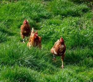 NW completes poultry abattoir for emerging farmers