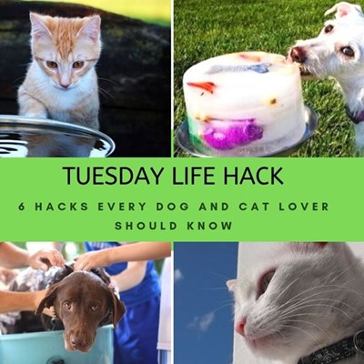 6 hacks every dog and cat lover should know