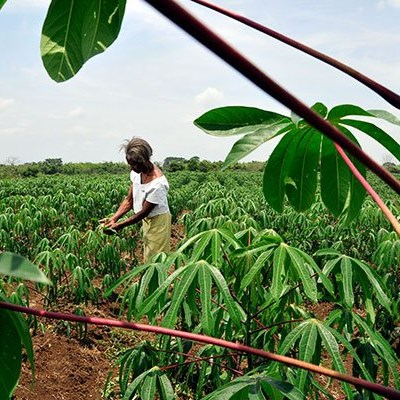 Subsidies can support food production during COVID-19 crisis