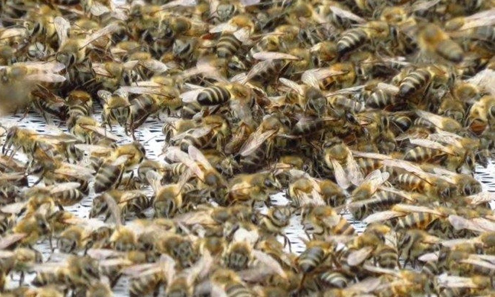 Bees settle in at the newspaper