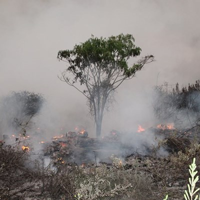 Update: Garden Route fires
