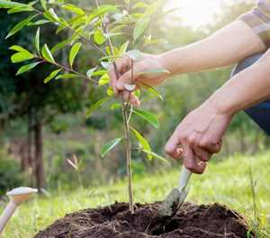 Boost your home's value: Plant a tree