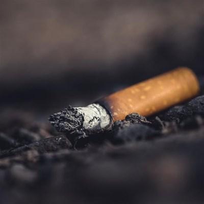 Illicit suppliers now run tobacco market, rob SA of R35m a day – Batsa