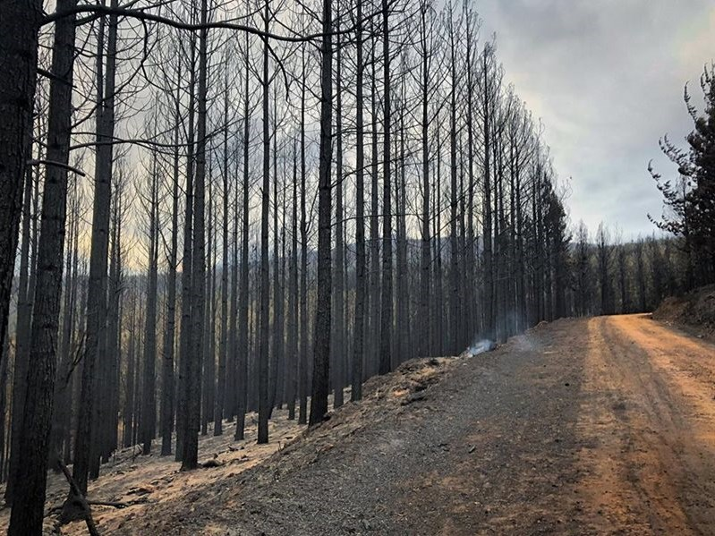 Latest update: Garden Route fires