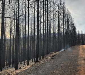 Latest update: Garden Route fires