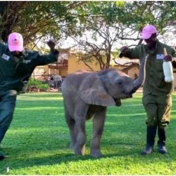 MUST SEE: Elephants, giraffes join 'Jerusalema' challenge