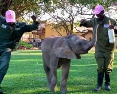 MUST SEE: Elephants, giraffes join 'Jerusalema' challenge