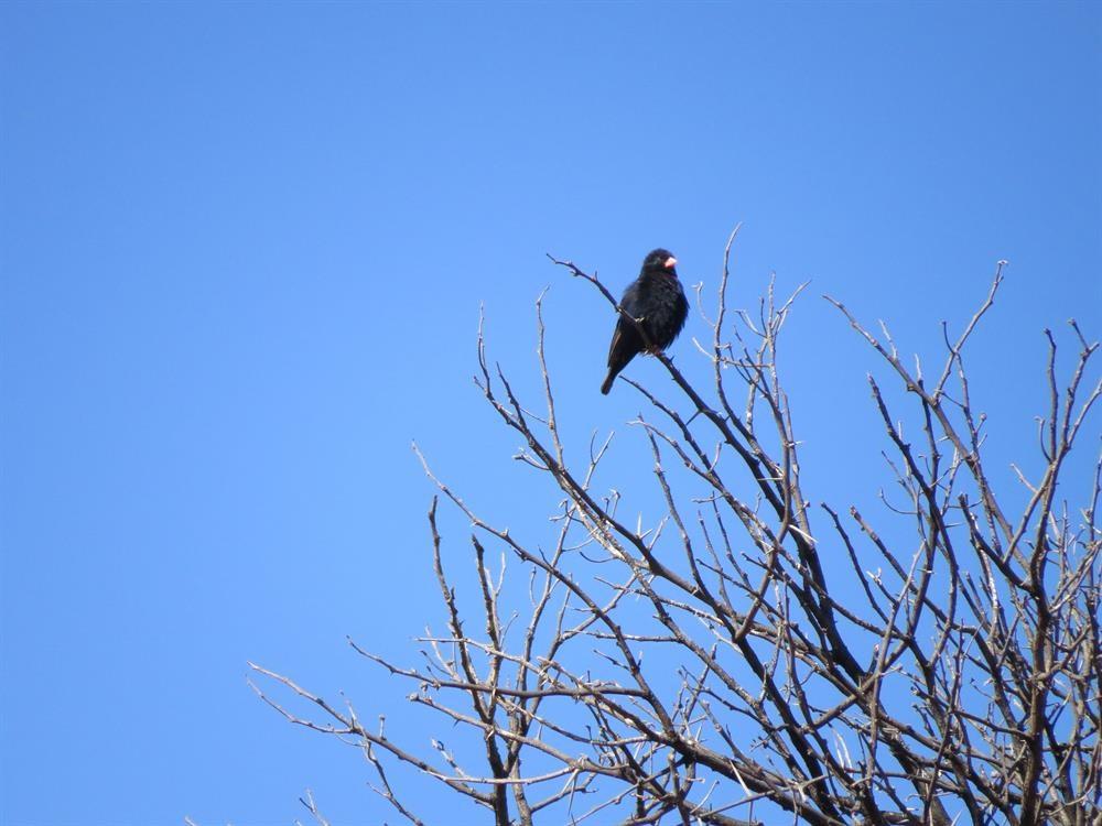 Local birders enjoy Karoo beauty