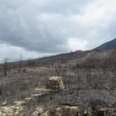 No hiking or feeding of wildlife after fires