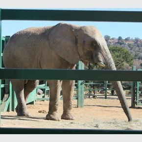 Historic win for African elephants at CITES Conference