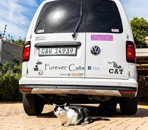 Kitties love their Caddy