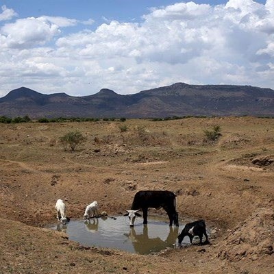 'Drought keeps taking a toll on SA farmers'