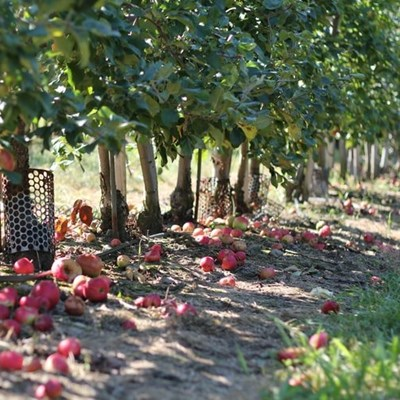 Top female farmer makes neglected orchards bloom again