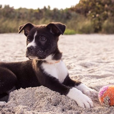 Rules for walking dogs on beaches
