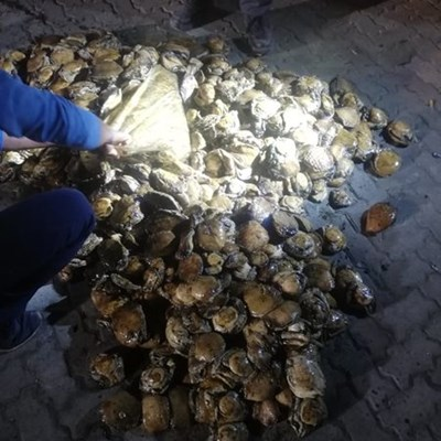 Man caught with R100 000 worth of abalone in Plett