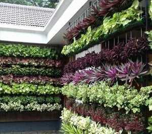 No space for a traditional garden - go vertical