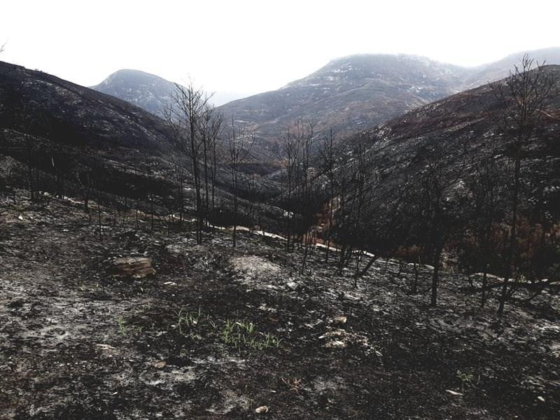 Garden Route fires update