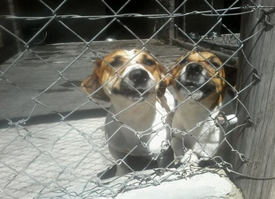Dogs and cats looking for homes