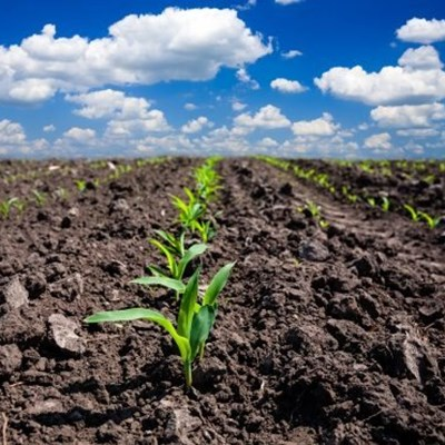 Breakthrough in plant engineering could boost productivity, feed millions more