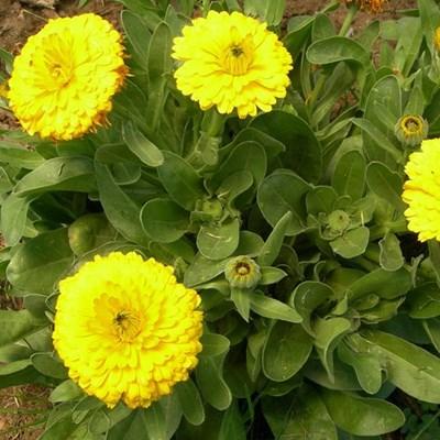 Immune boosting herbs and veggies