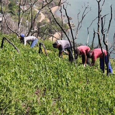 Opleiding vir nuwe en bestaande indringerplant-kontrakteurs aangebied