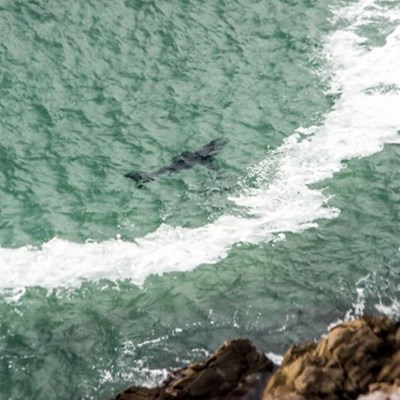 Shark alert for Plett bathers