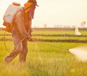 Herbicide 'safe in urban context'