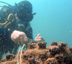 Diving for a cleaner ocean