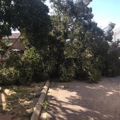 Mosselbaai-munisipaliteit waarsku teen sterk wind