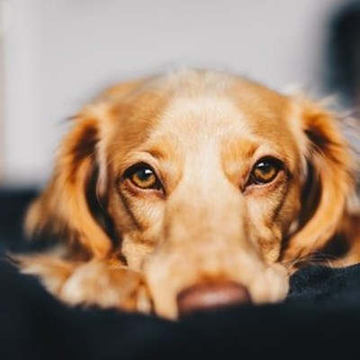 Tips for pets over the holiday