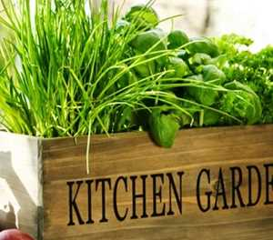 10 easy-to-grow herbs