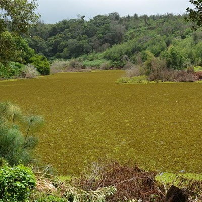 Concern over Kariba weed in dam