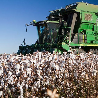 Edcon woes bring uncertainty for local cotton procurement