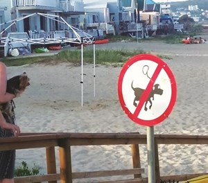 Dogs not allowed on beaches