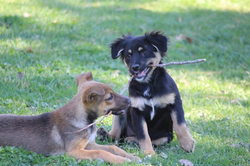 Fun day and dog show at Odin | George Herald