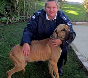 SPCA inspector warns against impersonator