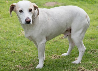 SPCA: Up for adoption