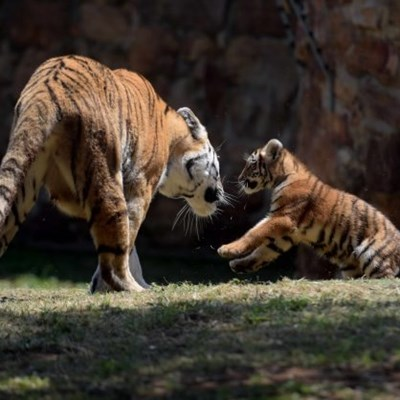 Babies! Joburg zoo celebrates its cutest new arrivals