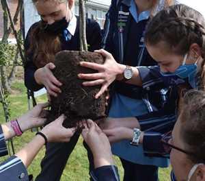 Leerders plant bome