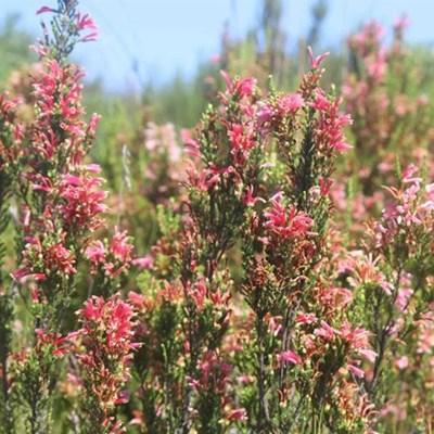 Coastal Fynbos reserves a possibility