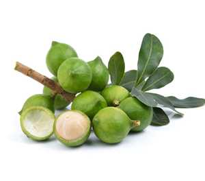 China's demand for macadamias boosts local production
